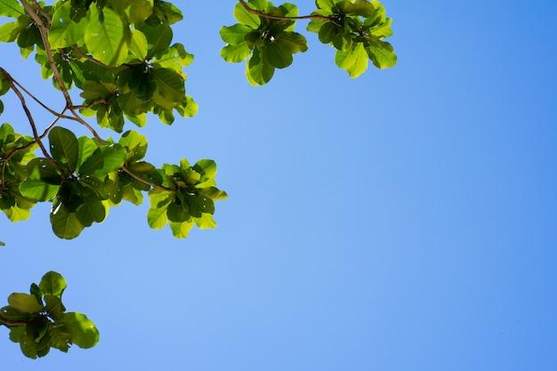 Galhos de árvores e céu azul