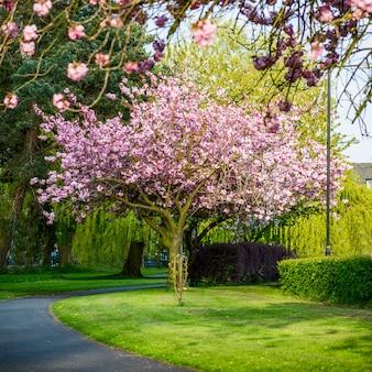 Galhos de árvores florescendo com flor rosa