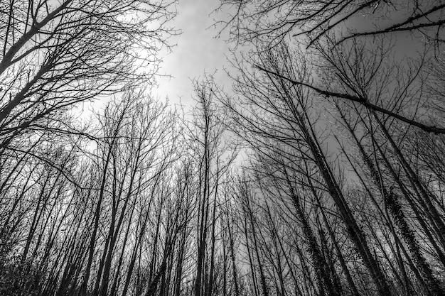Galhos de árvores no inverno com o céu ao fundo