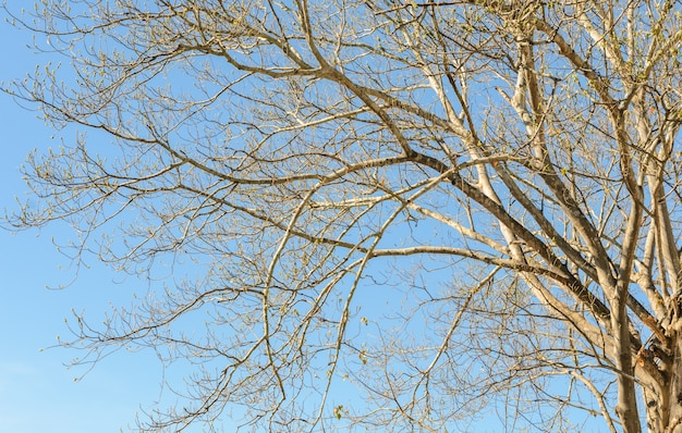 Galhos de árvores sem folhas no céu azul
