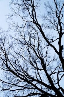 Galhos de árvores sem folhas