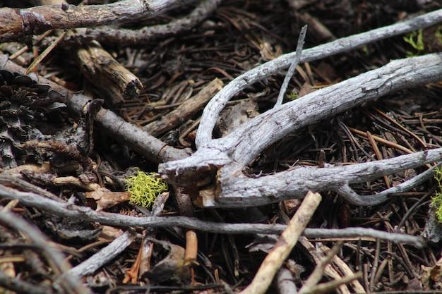 Galhos de árvores velhas e podres caídos no chão