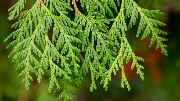 Galhos de árvores verdes em close-up