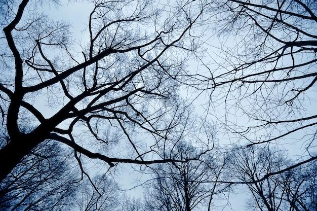 Galhos de árvores