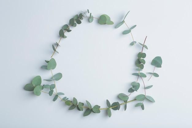 Galhos de eucalipto em fundo branco folhas frescas de eucalipto como base para cosméticos à base de óleos naturais e fragrâncias foto de alta qualidade