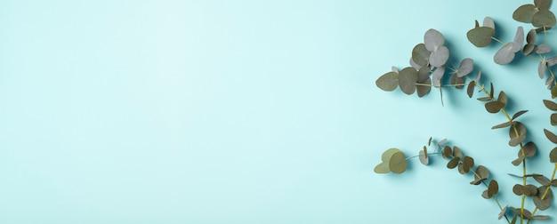 Galhos de eucalipto em um fundo de banner azul