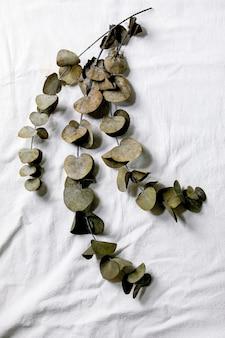 Galhos de eucalipto em volta de folhas sobre fundo de tecido de algodão branco