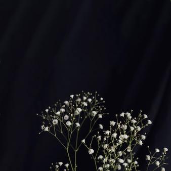 Galhos de flores frescas de luz