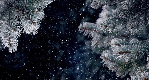 Galhos de pinheiro cobertos de geada em um fundo escuro durante uma nevasca, plano de fundo de natal e ano novo