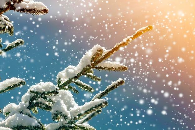 Galhos de pinheiro com agulhas verdes cobertas com neve limpa fresca profunda no fundo do espaço de cópia azul turva ao ar livre. feliz natal e feliz ano novo cartão postal de saudação. efeito de luz suave.