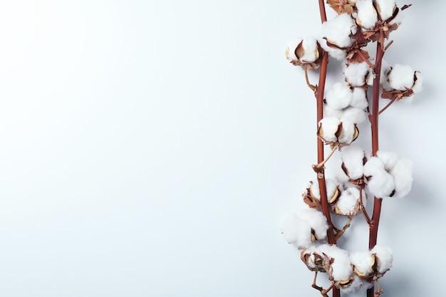 Galhos de plantas de algodão na superfície branca