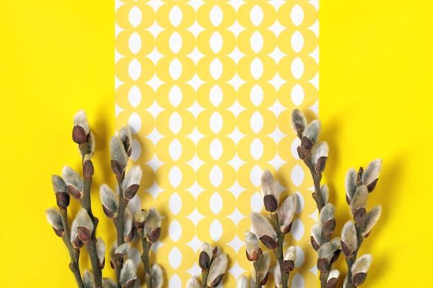 Galhos de salgueiro com amentilhos em fundo amarelo. plano de fundo liso floral da primavera. cartão de primavera com espaço para texto.