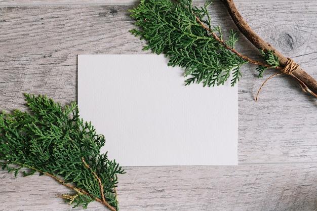 Galhos de thuja no papel em branco branco contra o pano de fundo texturizado de madeira