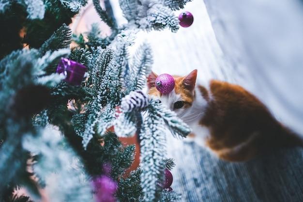 Galhos de uma árvore de natal com neve e um gato