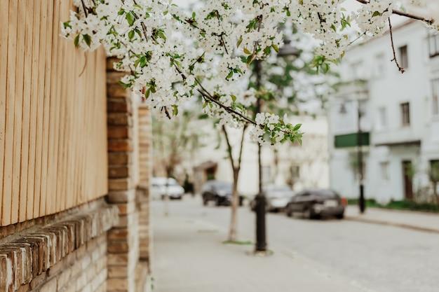 Galhos de uma árvore florescendo. fundo desfocado da cidade