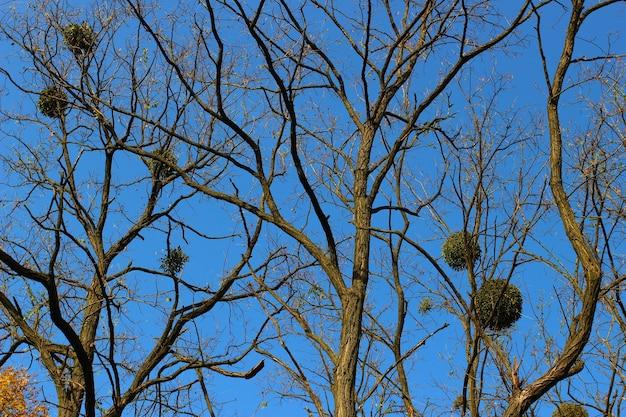 Galhos de uma árvore sem folhas