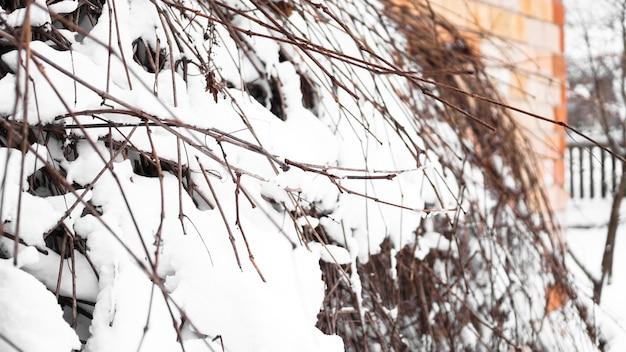 Galhos de uma jovem macieira sob a neve em uma manhã ensolarada e gelada, cerca e uma parede de tijolos ao fundo