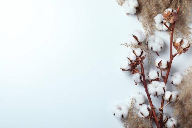 Galhos e juncos de plantas de algodão na superfície branca