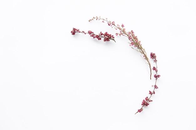 Galhos florescendo de flores silvestres