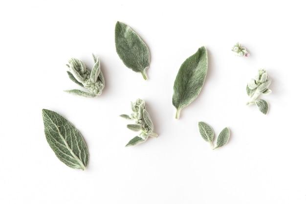 Galhos, folhas e pétalas