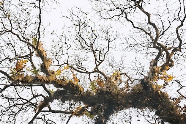Galhos nus da árvore com folhas de samambaias mortas contra o céu claro