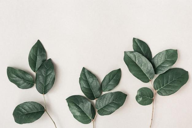 Galhos pequenos frescos com folhas verdes