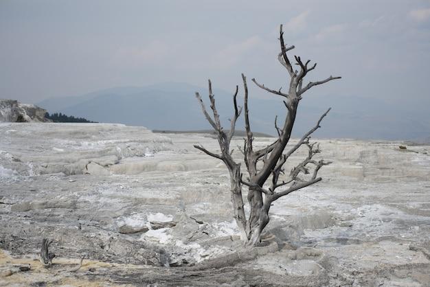 Galhos secos de uma planta crescendo no solo rochoso do parque nacional de yellowstone