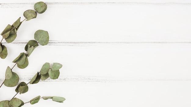 Galhos secos em fundo branco de madeira
