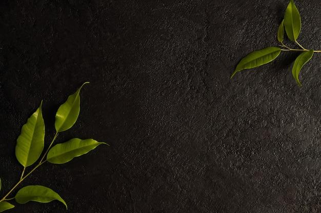 Galhos verdes em um espaço preto do fundo, do quadro e da cópia.