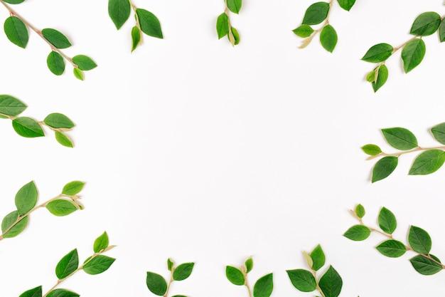 Galhos verdes, ervas, folhas, plantas, borda do quadro em branco