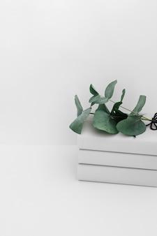 Galhos verdes no livro empilhado isolado no pano de fundo branco