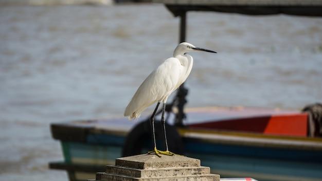 Garça-branca em fundo de barco ao lado do rio