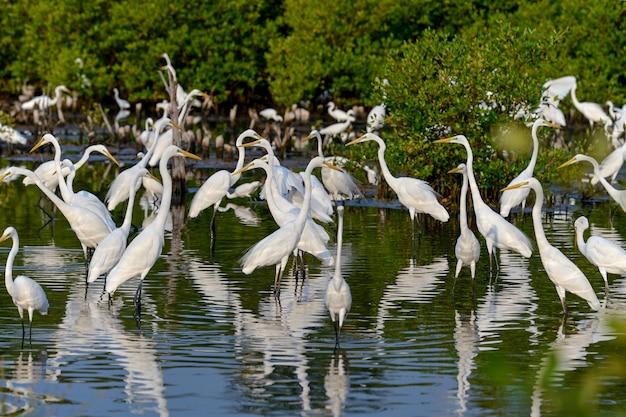 Garça-branca-pássaro na fonte de água natural