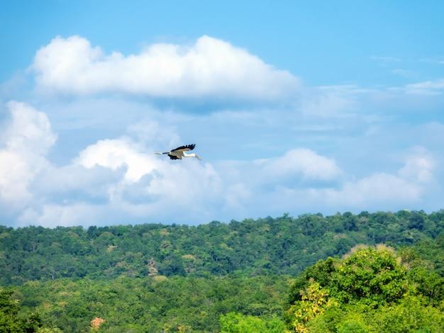 Garça branca voando no céu.