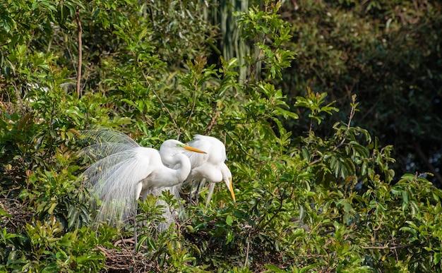 Garça, lindo e enorme ninho de garças no brasil. foco seletivo.