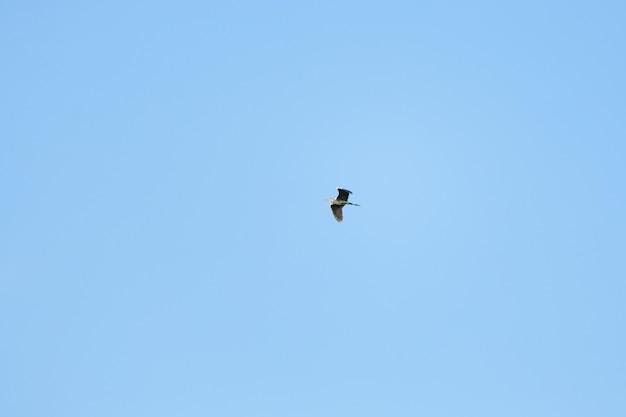 Garça voa contra o céu azul