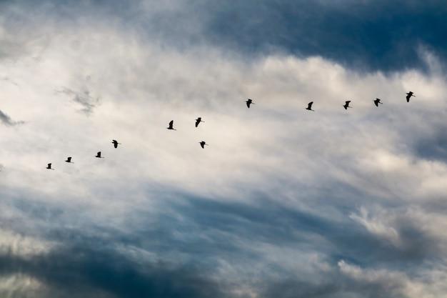 Garça voando para casa no céu azul branco nuvem macia