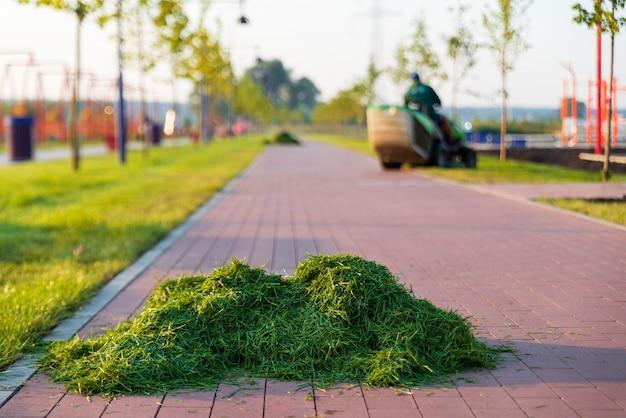 Gardener corta a grama, deixando montes de grama recém-cortada.