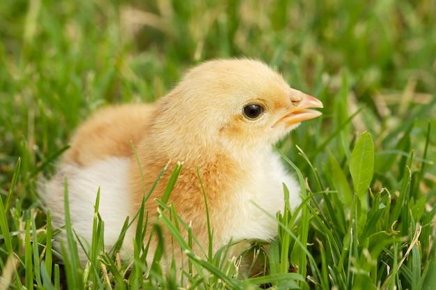 Garota adorável na grama verde