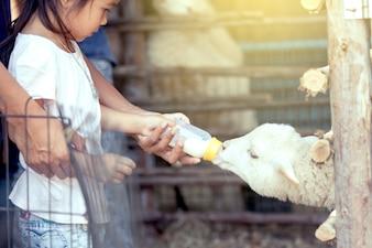 Garota e pai asiáticos estão alimentando um cordeiro