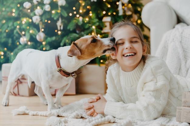 Garota engraçada feliz recebe beijo de jack russell terrier cachorro vestido com camisola de malha de inverno