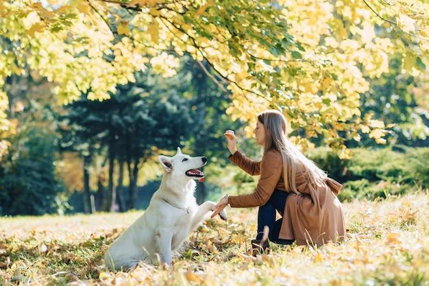 Garota entra no parque outono com jovem pastor branco suíço