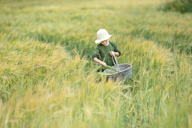 Garota feliz andando no trigo dourado, curtindo a vida no campo. beleza da natureza e campo de trigo. estilo de vida ao ar livre da família. conceito de liberdade. menina bonitinha no campo de verão