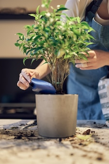 Garota irreconhecível replanta planta de casa verde no vaso