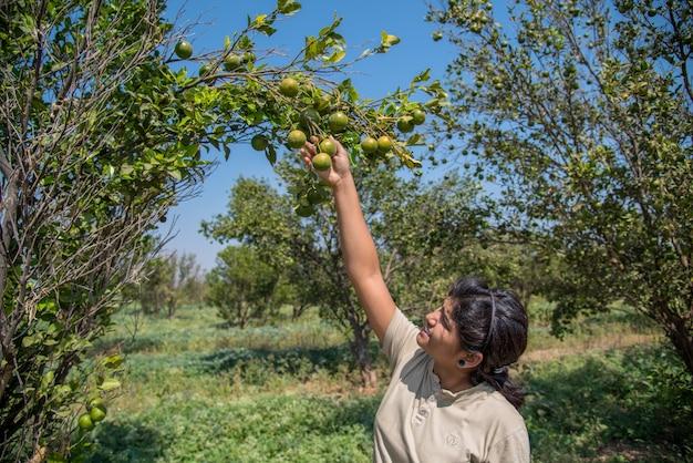 Garota jovem agricultor segurando e examinando laranjas doces de árvores nas mãos.
