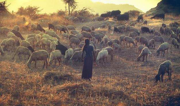 Garota rural indiana pastoreando ovelhas e cabras