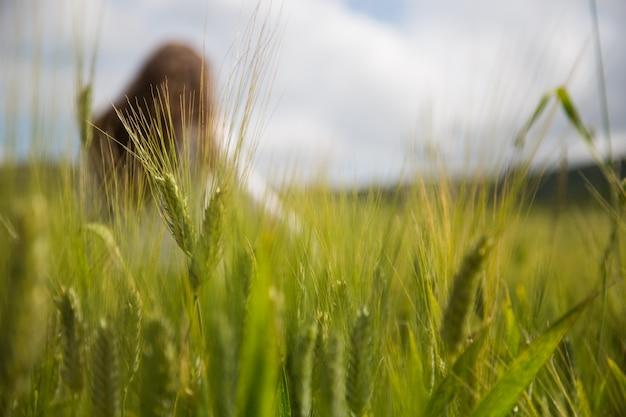 Garota turva em um campo