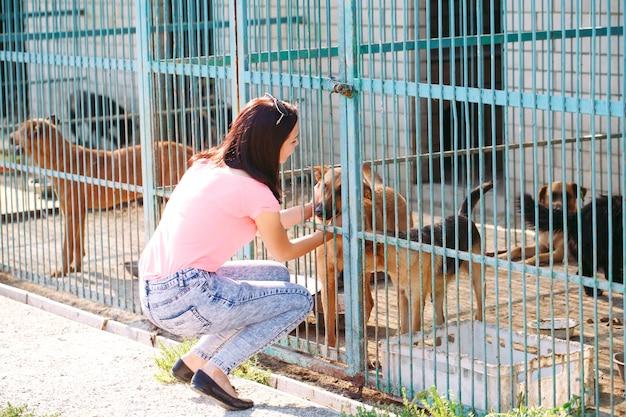 Garota voluntária no berçário para cães. abrigo para cães vadios.