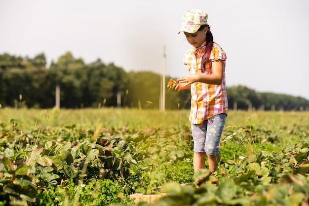 Garotinha colhendo morangos no campo