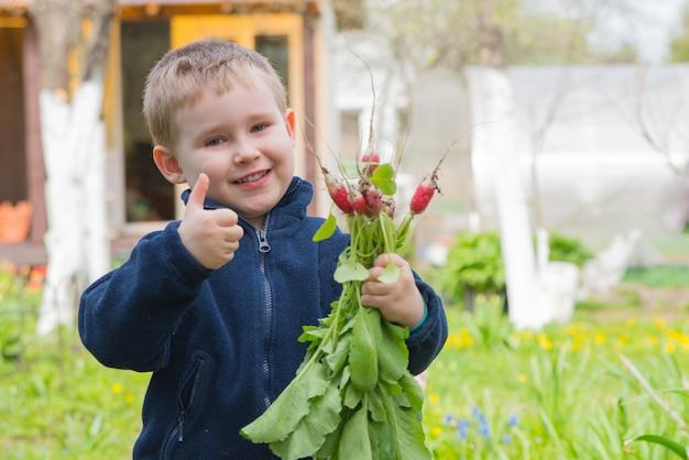 Garotinho adorável com o monte de rabanete mostra o polegar e sorri. foto de verão de jovem agricultor
